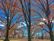 与橙色秋天叶子的美国国会景色 免版税库存图片