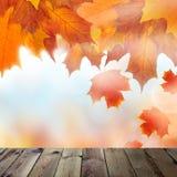 与橙色秋天槭树叶子的背景 免版税图库摄影