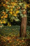 与橙色秋天橡树的秋天风景在领域 免版税库存照片