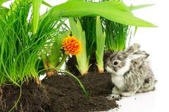 与橙色花和绿色植物的逗人喜爱的兔子 库存图片