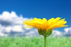 与橙色花的背景在天空 库存图片