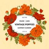 与橙色,红色鸦片的葡萄酒花卉框架在米黄背景 库存照片