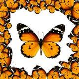 与橙色蝴蝶的框架 免版税库存图片