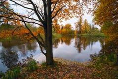 与橙黄叶子的橡树在秋天的湖边缘 免版税库存图片