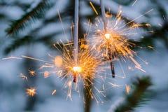 与橙黄色光的两个闪烁发光物在一棵云杉的树 免版税库存照片