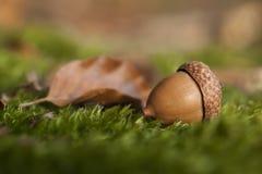 与橡子和秋天叶子的Atumn静物画 免版税图库摄影