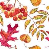 与橡子和秋天橡木的无缝的样式在橙色,米黄,棕色和黄色离开 为墙纸,礼物纸完善 免版税库存图片