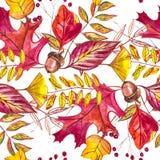 与橡子和秋天橡木的无缝的样式在橙色,米黄,棕色和黄色离开 为墙纸,礼物纸完善 免版税图库摄影