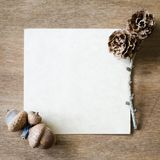 与橡子和锥体的空的纸板料 图库摄影