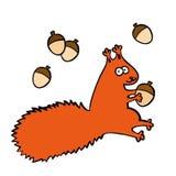 与橡子的传染媒介滑稽的红松鼠 库存照片