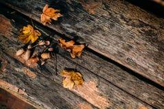 与橡子的土气,老木背景和五颜六色的叶子装饰 免版税库存图片
