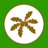 与橡子的橡木叶子 免版税库存图片