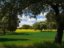 与橡木、草甸和油菜籽的风景 免版税库存图片