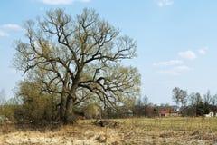 与橡木和村庄的俄国农村风景 免版税库存照片