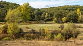 与橡木森林谷的风景 免版税图库摄影