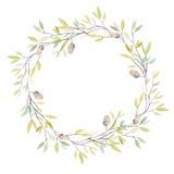 与橡木橡子和叶子的水彩花圈 隔绝在白色b 库存例证