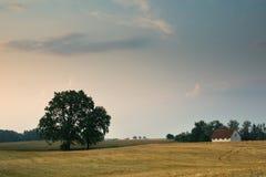 与橡木的风景 免版税库存照片