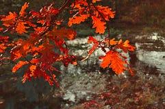 与橡树的秋天风景分支在干燥老池塘 库存图片