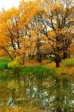 与橡树的秋天风景在池塘附近 库存图片