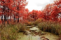 与橡树的秋天风景在池塘附近 图库摄影