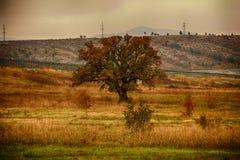 与橡树的秋天风景在领域 库存图片