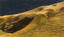 与橡树的金黄小山 库存图片