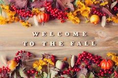 与欢迎的秋天背景不折不扣秋天和秋天自然莓果、南瓜和花 免版税库存图片
