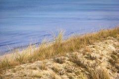 与欧洲海滩草的沙丘 库存图片