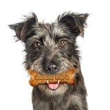 与款待的好狗在嘴 免版税库存照片