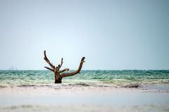 与死的树的海景 库存照片