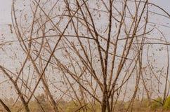 与死的树的老蜘蛛网 免版税库存照片