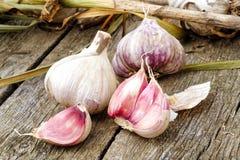 与残破的电灯泡的整个在鲁斯的大蒜和桃红色丁香和叶子 库存图片