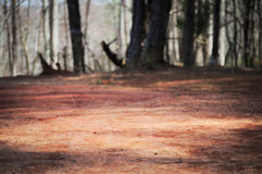 与残破的树的贫瘠红色地球 库存图片
