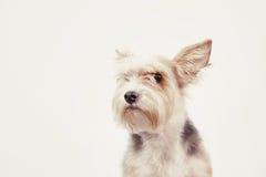 与殷勤神色的好奇友好的狗 免版税库存照片