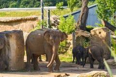 与母亲的婴孩大象 图库摄影