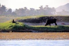 与母牛和休息的男孩的埃及风景银行的 免版税库存图片