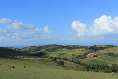 与母牛的农村斯威士兰风景,南部非洲,非洲自然 库存照片
