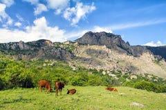 与母牛的山风景 免版税库存图片