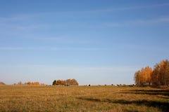 与母牛的秋天lanscape 库存照片