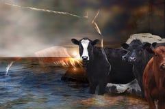 与母牛的马 免版税库存照片