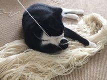 与毛线的猫 免版税库存图片