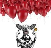 与气球和棒棒糖的逗人喜爱的达尔马希亚狗 图库摄影