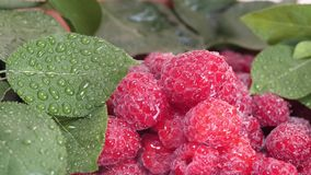 与水下落和绿色叶子的新鲜和甜成熟莓 股票视频
