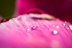 与水下落特写镜头的桃红色花事假 库存图片