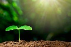 与水下落的增长的绿色新芽在与阳光的被弄脏的绿色bokeh背景 图库摄影