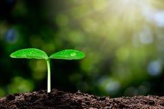 与水下落的增长的绿色新芽在与阳光的被弄脏的绿色bokeh背景 免版税库存图片