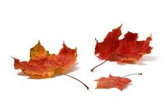 与水下落的秋叶在白色 库存图片