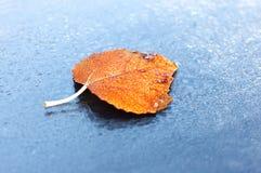 与水下落的秋叶 库存图片