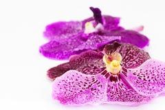 与水下落的紫色兰花在白色背景 库存照片