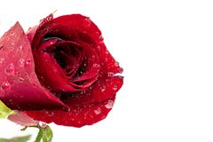 与水下落的红色玫瑰 图库摄影